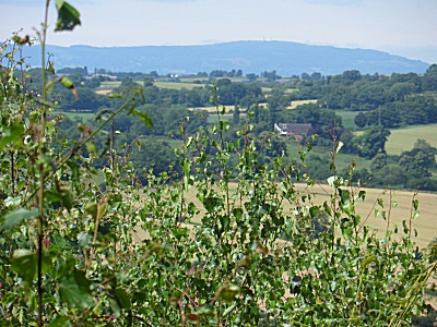 Brown Clee Hill from Kinver Edge