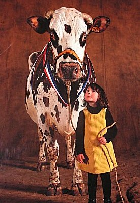 Cow and adoring child