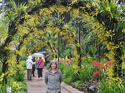 Golden Shower Arches in Singapore Botanic Garden