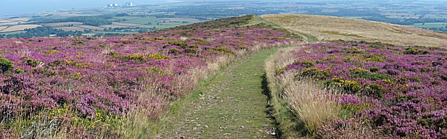 Hinkley Point in the distance from Longstone Hill