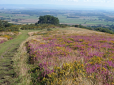 Quantock Hills above Holford