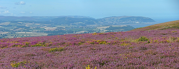 Minehead and Exmoor from Bicknoller Post