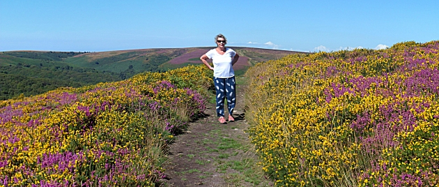 Sue amongst the gorse and heather on Hare Knapp